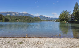 Bled lake pubble beach stock photos