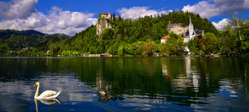 Bled lake. With a white swan royalty free stock images