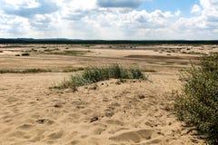 Bledowska-Wüste (Polen) stockbilder