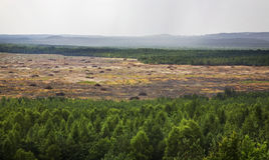 Bledowwoestijn dichtbij Klucze polen Royalty-vrije Stock Fotografie