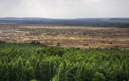 Bledowwoestijn dichtbij Klucze polen Stock Afbeelding