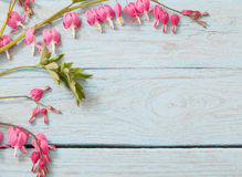 Bleeding Heart Flowers Royalty Free Stock Images