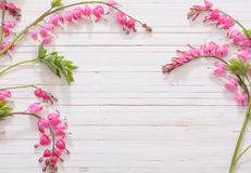 Bleeding heart flowers on  wooden background Stock Photography