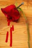 Bleeding Rose Royalty Free Stock Images