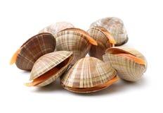 Bleek tweekleppige schelpdieren stock foto