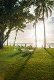 Bleekmiddelstoelen onder de palm die de zonsondergang bekijken Stock Afbeelding