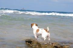 Bleiben auf dem Ufer Lizenzfreies Stockfoto