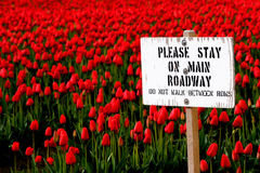Bleiben Sie auf Hauptfahrbahnzeichen mit rotem Tulpefeld Stockfotografie