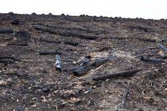 Bleibt von einem Wald, der zu Boden gebrannt wurde Stockfoto