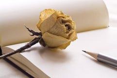 Bleistift und Rose Stockbilder