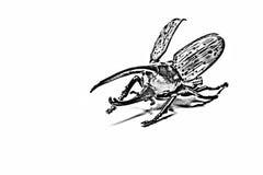Bleistift-Zeichnung des Käfers Herkules lizenzfreies stockbild
