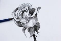 Bleistift-Zeichnung I von Blumen Stockbild