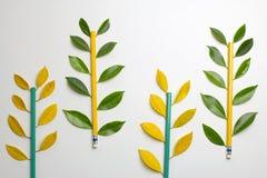 Bleistifte mit Blättern Flache Lage Stockbilder
