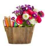 Bleistifte und Asterblumen Lizenzfreies Stockbild