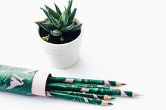 Bleistifte und saftige Anlage Stockfotos