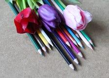 Bleistifte und Tulpen Lizenzfreie Stockbilder