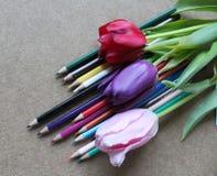 Bleistifte und Tulpen Stockbilder