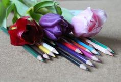 Bleistifte und Tulpen Stockbild