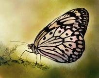 Bleke Vlinder - het Schilderen van de Waterverf Royalty-vrije Stock Foto's