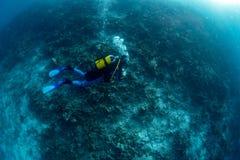 Bleken van het ertsader het Dode koraal in Indonesië royalty-vrije stock afbeelding