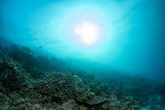 Bleken van het ertsader het Dode koraal in Indonesië stock foto's