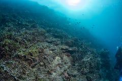 Bleken van het ertsader het Dode koraal in Indonesië royalty-vrije stock foto