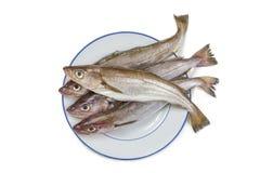 Blekmedel- eller matfisk Merlangius eller whithing fild på en platta på vit bakgrund arkivfoton