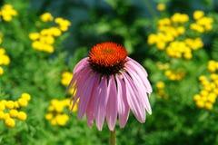 blekna blomma arkivfoton