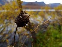 Blekna blomman på en höstdag arkivfoto