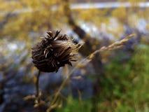 Blekna blomman på en höstdag royaltyfri bild
