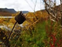 Blekna blomman på en höstdag arkivfoton