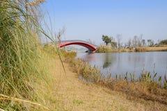 Blekna den gräs- strandkanten för röd ärke- bro i solig vinter a fotografering för bildbyråer