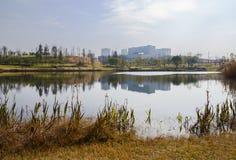 Blekna lakesidegräs med moderna byggnader i avstånd royaltyfri bild