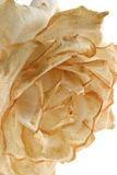 blekna rosevertical Royaltyfria Foton