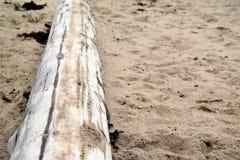 Blekt trädstam på stranden Royaltyfri Foto