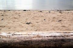 Blekt trädstam på stranden på kustlinjen Royaltyfri Foto