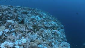 Blekte koraller lager videofilmer