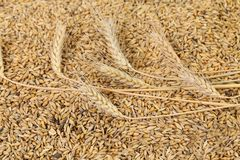 Blend of different grains. Close up. Stock Images