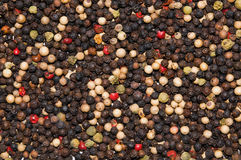 Blend of peppercorns Stock Photos