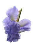 Blende auf weißer Hintergrundbetrugreflexion Lizenzfreies Stockbild
