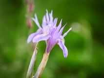 blende Schöne Blumen auf den äolischen Inseln, Sizilien, Italien Stockfotos