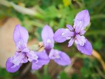 blende Schöne Blumen auf den äolischen Inseln, Sizilien, Italien Stockbild