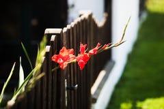 Blende schaut aus einem Gartenzaun heraus Stockfotografie