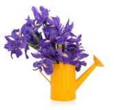 Blenden-Blumen Lizenzfreie Stockbilder