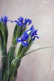 Blenden-Blumen Stockbilder