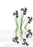 Blenden-Blumen-Schönheit Lizenzfreie Stockfotos
