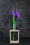 Blenden in einem Vase Lizenzfreie Stockfotografie