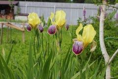 Blenden im Garten Blumen Stockbild