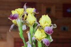 Blenden im Garten Blumen Stockfotografie