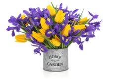 Blenden-und Tulpe-Blumen Stockfotos
